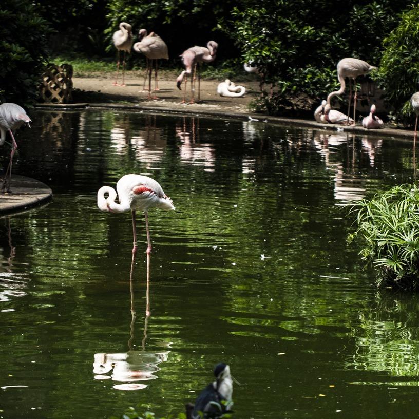 Flamingo friends at Kowloon Park